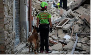 Una rete di sicurezza: i medici veterinari uniti per la gestione delle emergenze